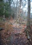 Pond Trail1
