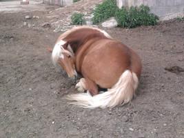 sleeping Horse stock 01 by Fabolouse-Stock