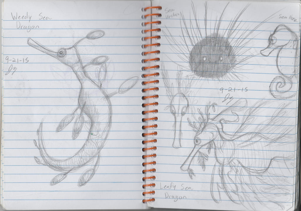 Notebook Sketches - Leafy Sea Dragons and More by HyperSonicFire15