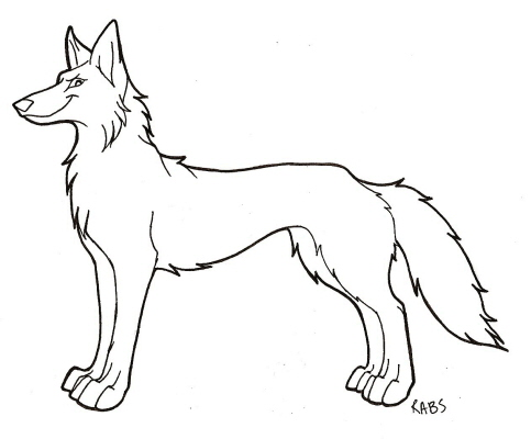 the gallery for gt coyote drawing