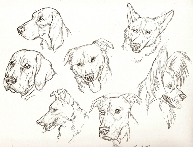 How To Draw Pup...