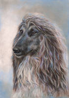 AfghanHounds 2015 March