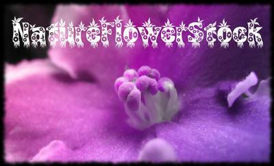 natureflowerstock's Profile Picture