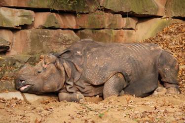 Sleepy giant by Ampata