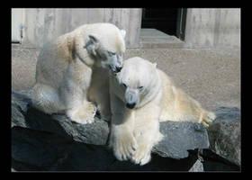 polar bears by DokJekyll