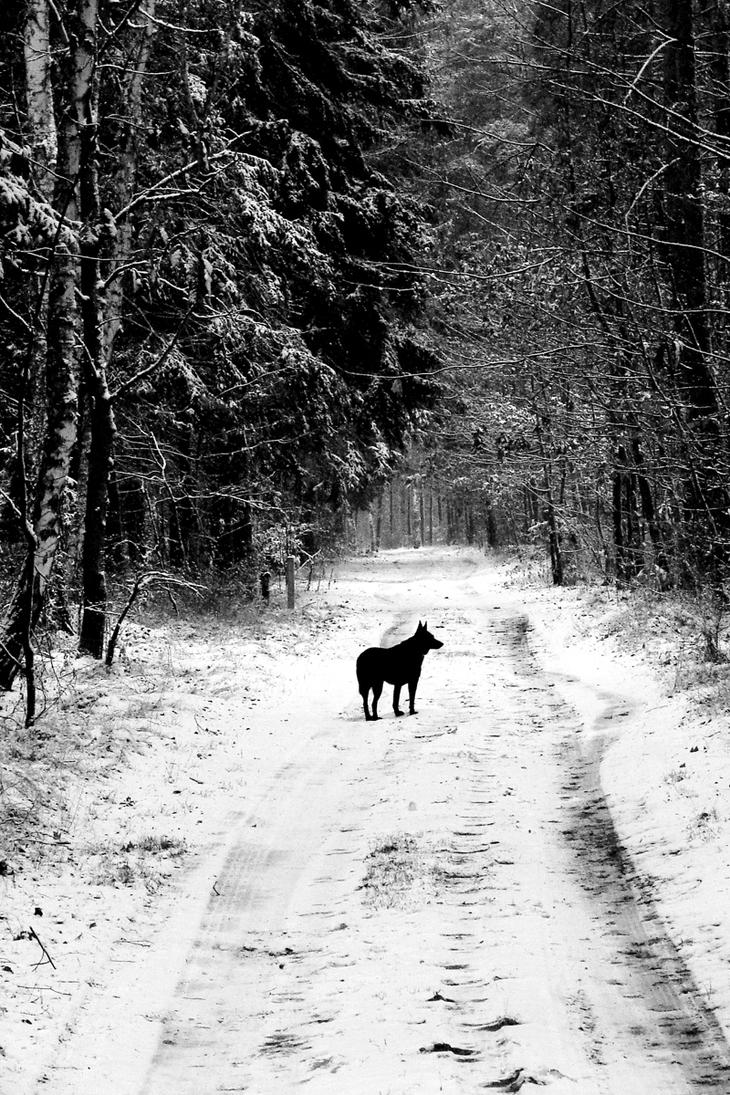Path of the Wolf by Kanteletar