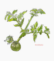 Green tomatoes by VishKeks