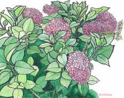 Hydrangeas by VishKeks