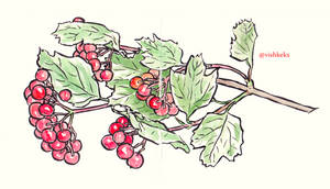 Guelder rose berries by VishKeks