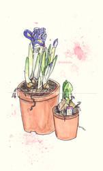 Iris and narcissus
