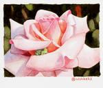 Tiny frog in a rose by VishKeks