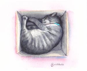 Cat No.2
