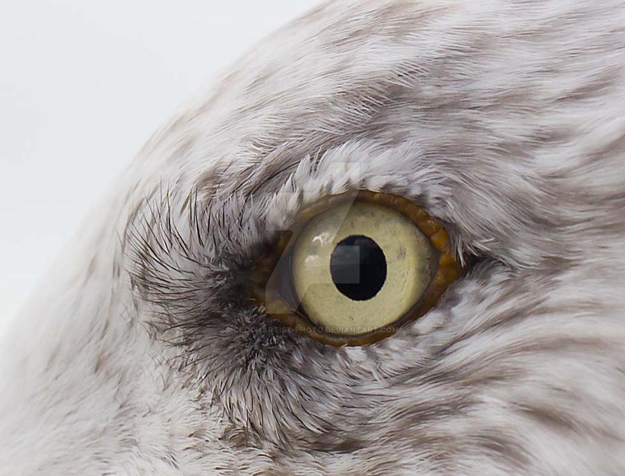 the eye... by clochartist-photo