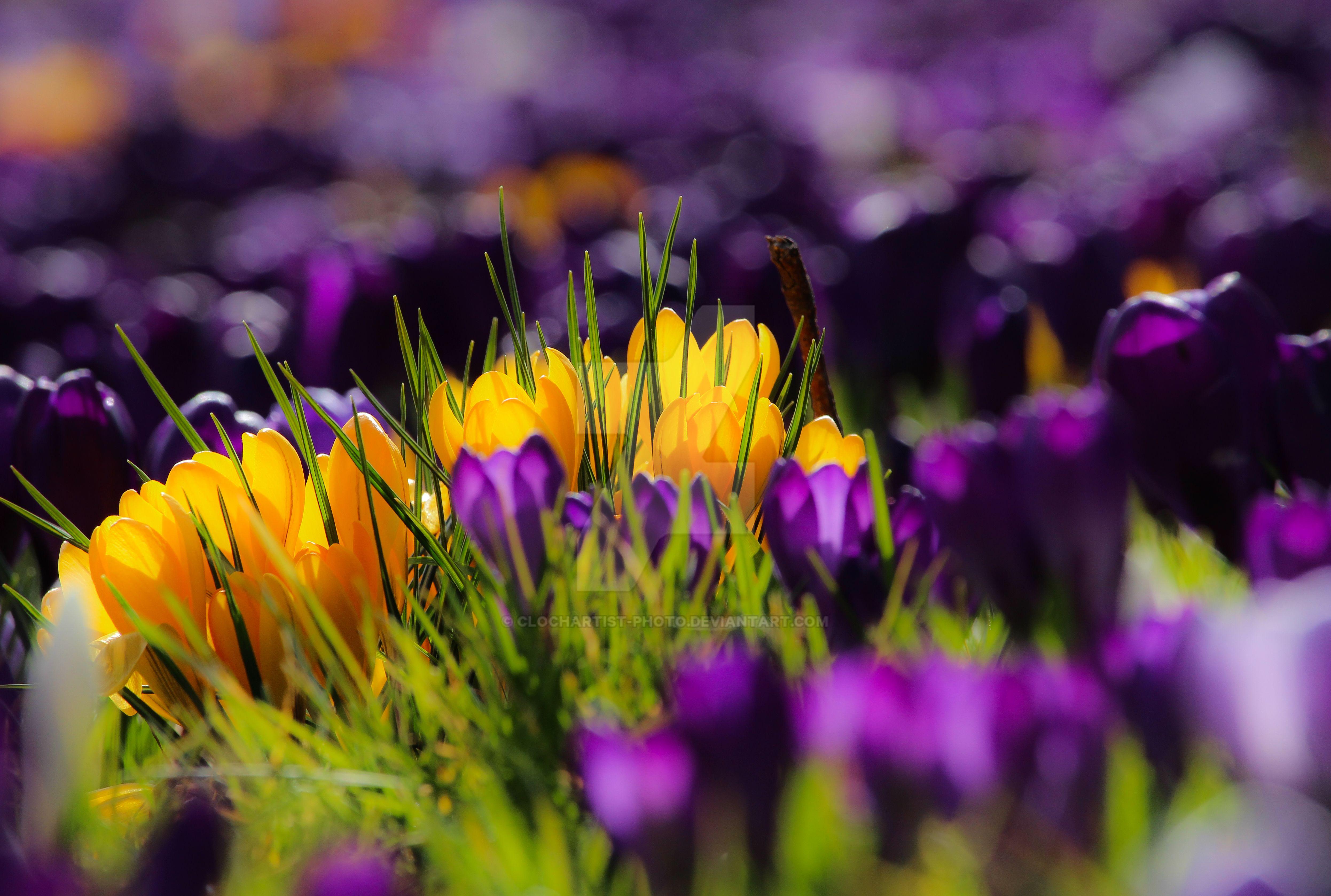 Скачать Обои На Телефон Весна
