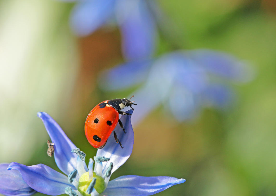 Let me introduce myself: It's bug... Ladybug by clochartist-photo