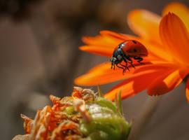 Summer feelings in autumn... by clochartist-photo