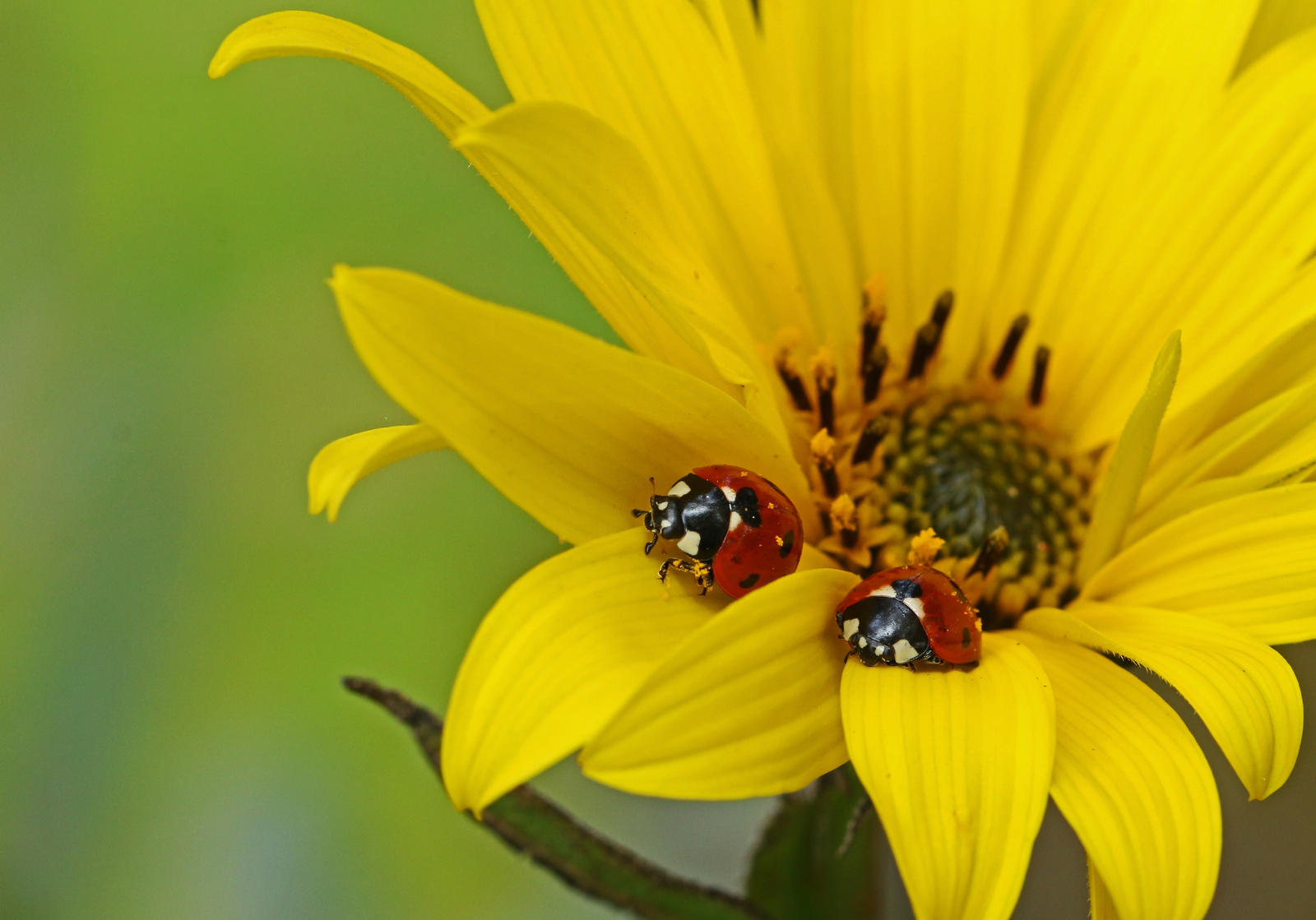 A couple of bugs... by clochartist-photo