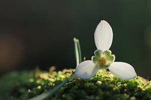 Spring will soon be here..I hope! by clochartist-photo