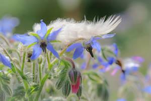 Natures kitsch... by clochartist-photo