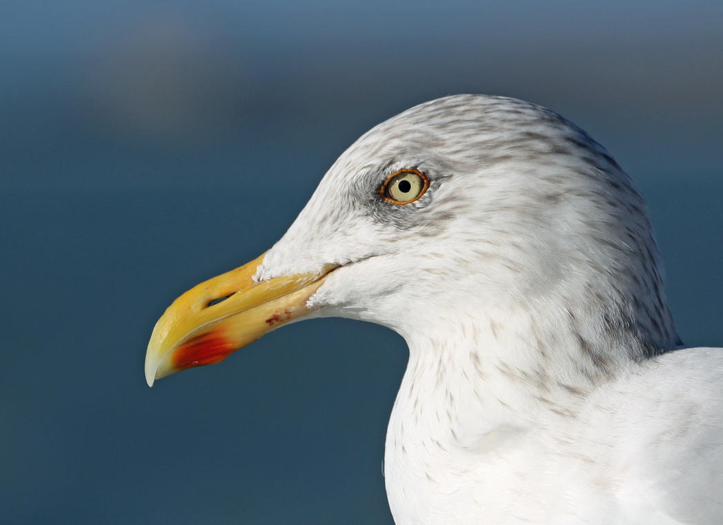 gull enjoying autumn sun... by clochartist-photo