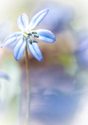 common bluebell... by clochartist-photo
