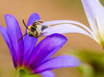 Let it bee... by clochartist-photo