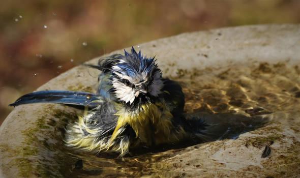 punky takes a bath...