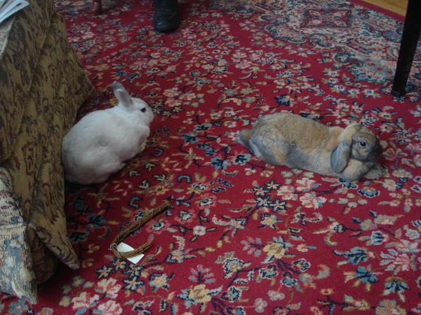 bunnies by air-fairy15