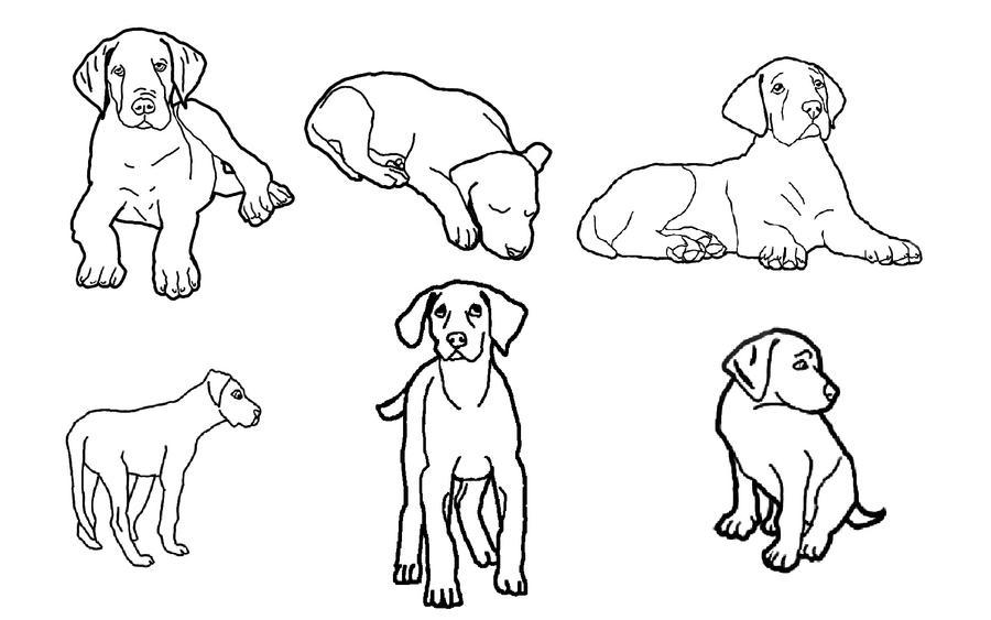 great dane coloring pages - corgi dog coloring pages coloring pages
