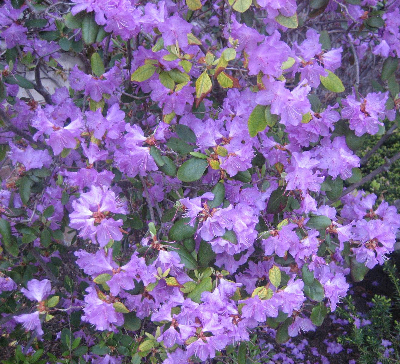 Purple Flowering Plant by elbarto252 on DeviantArt