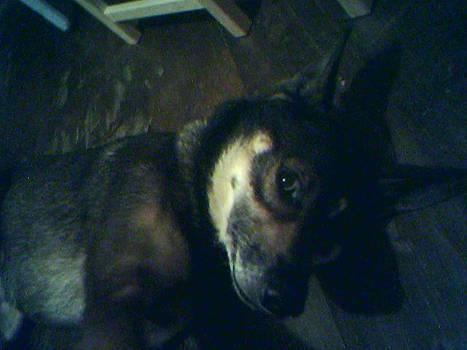 My Bad Dog