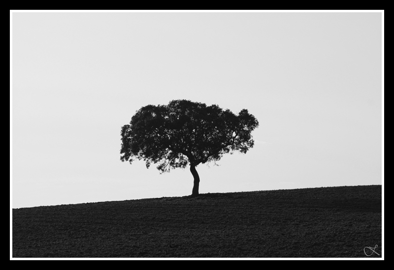 Isolado