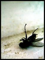 Dead Fly II by Tyziel