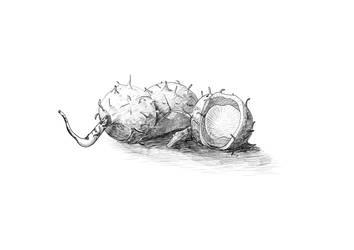 Inktober 2018 25 Prickly by OdoHorst