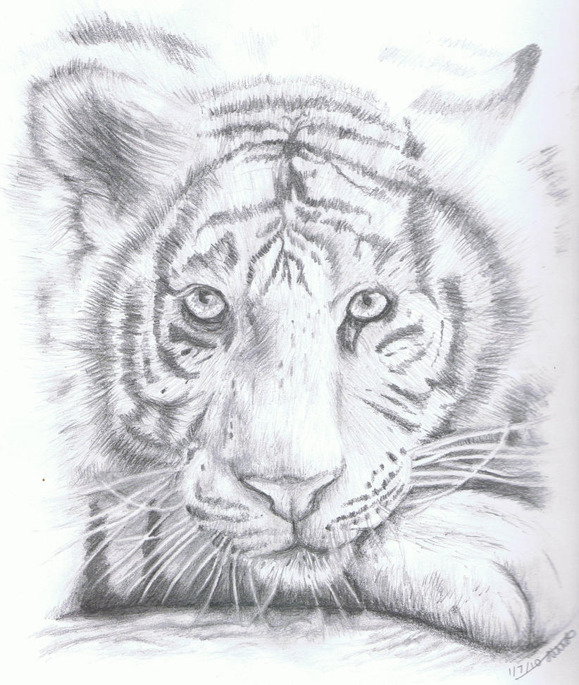 Cute White Tiger Drawing White tiger by whisperingequus
