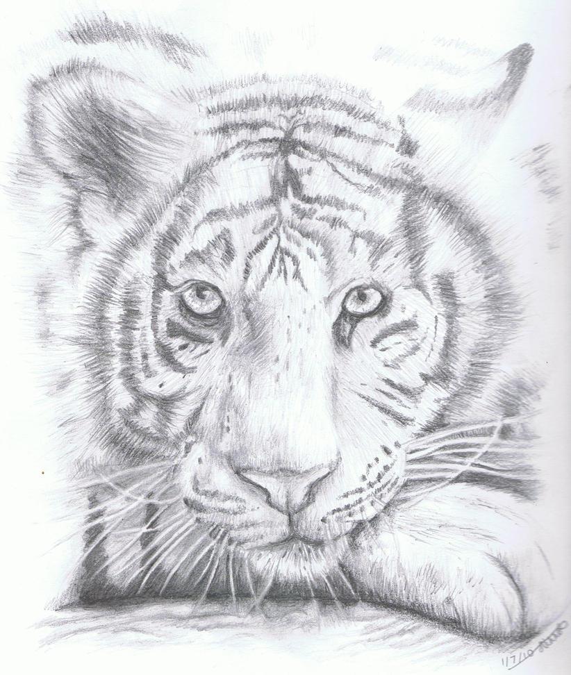 White Tiger by WhisperingEquus on DeviantArt