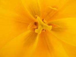 Yellow Spring by Sabbelbina