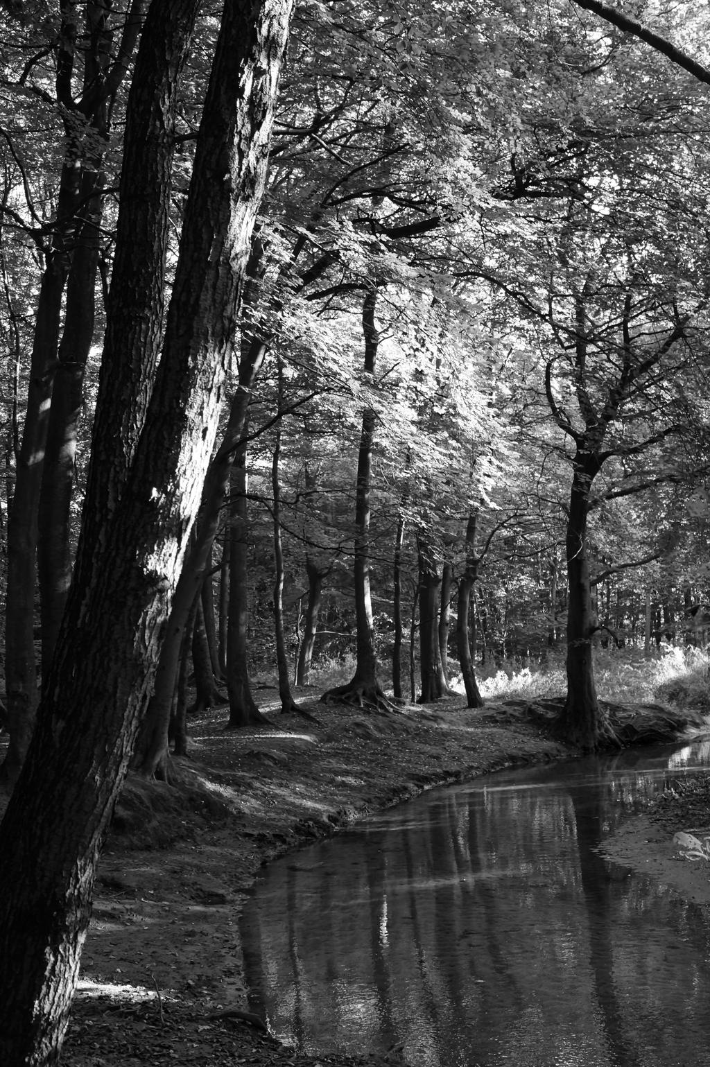 Black Forest by Sabbelbina