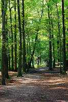 Green Forest by Sabbelbina