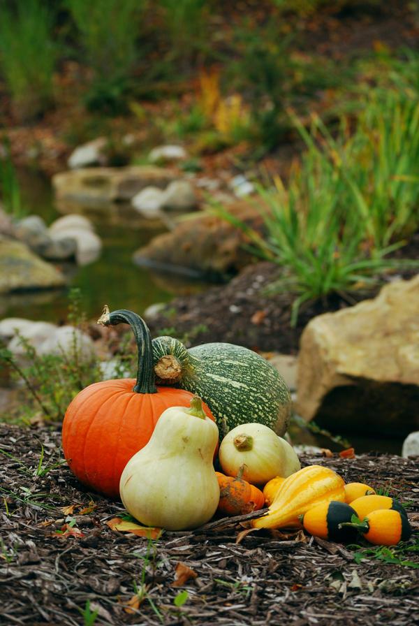 Pumpkin Stock 013 by redwolf518stock