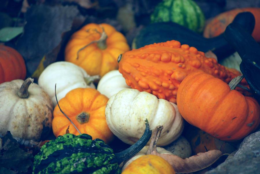 Pumpkin Stock 014 by redwolf518stock