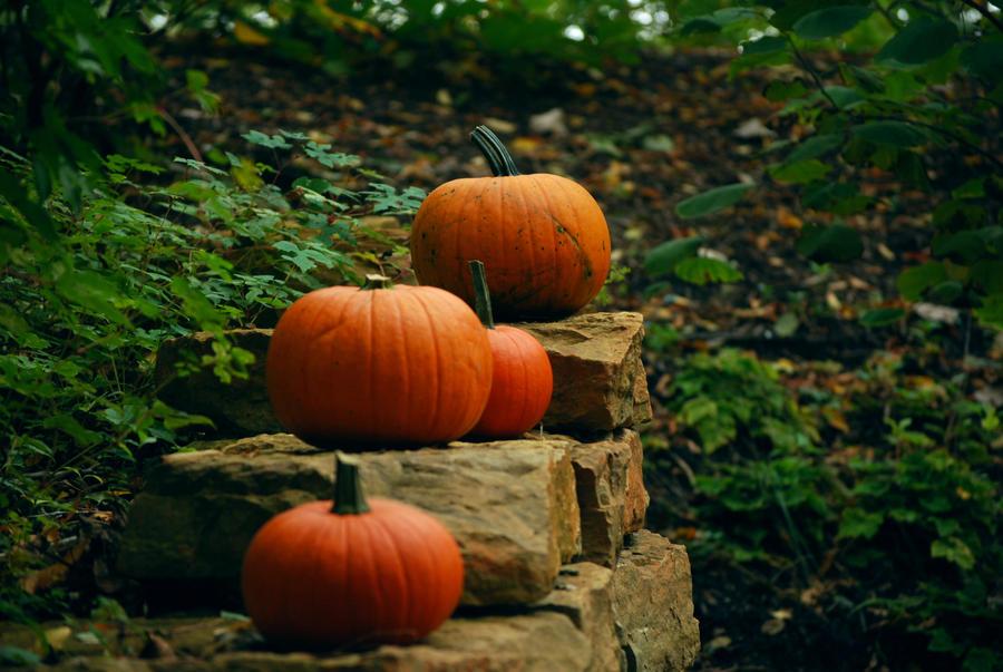 Pumpkin Stock 015