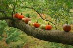 pumpkin stock 0019 by redwolf518stock