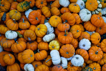 T. Burton Pumpkin Stock by redwolf518stock