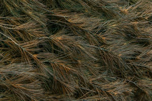 J. Urbaniak Texture Stock by redwolf518stock