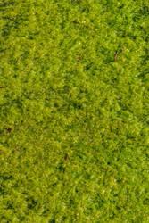 Green Goo by redwolf518stock