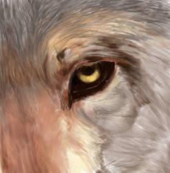 Wolf by FalseEnthusiasm