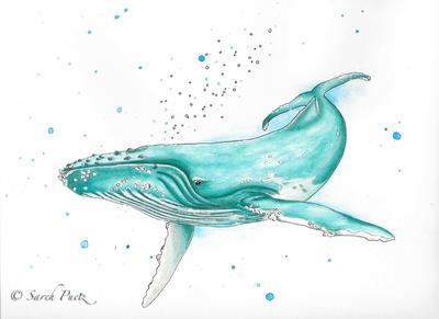 Humpback Whale by Sarehlisa