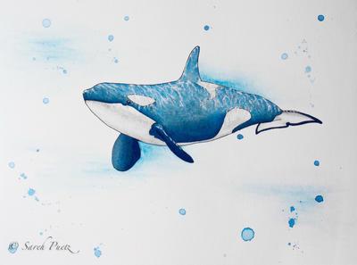 Orca by Sarehlisa