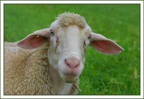 Sheep I by caro77